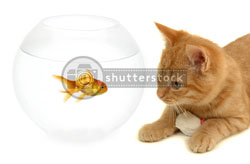 shutterstock cat fish